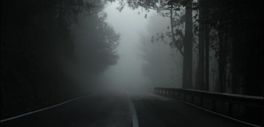 forest-still